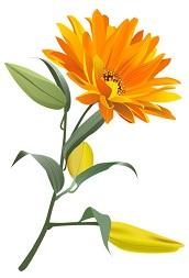 Oranssi kukka